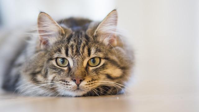imagen de un gatito