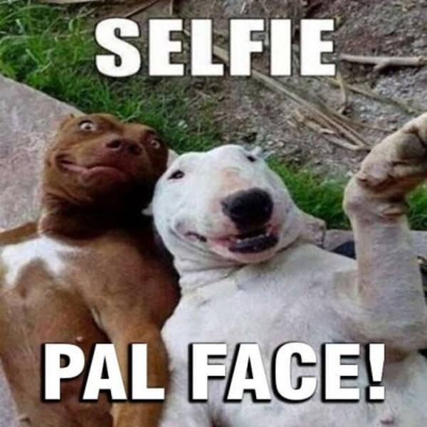 Imagenes graciosas de selfie